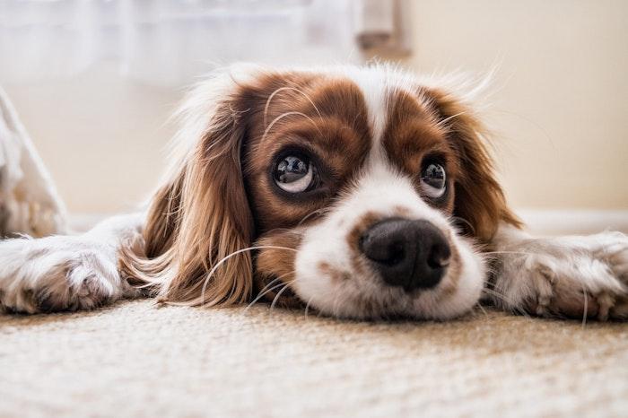 狂犬病と犬のワクチン接種