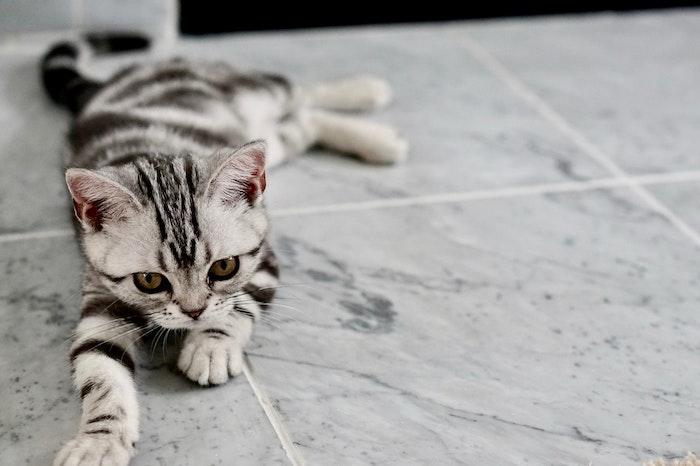 混合ワクチンで猫の病気リスクを下げよう