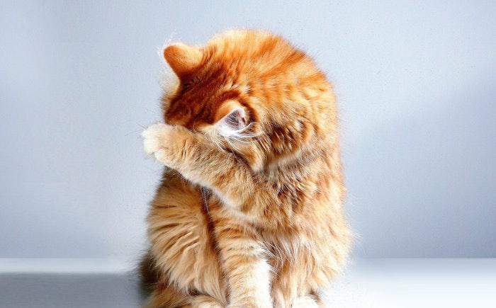 猫の外部寄生虫は薬で予防しておきたい