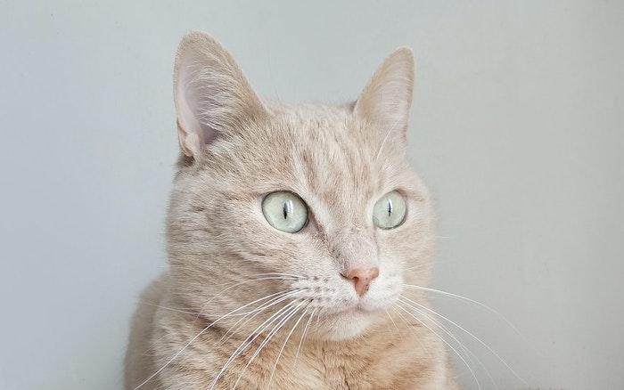 猫にも存在する内部寄生虫の予防は絶対必要