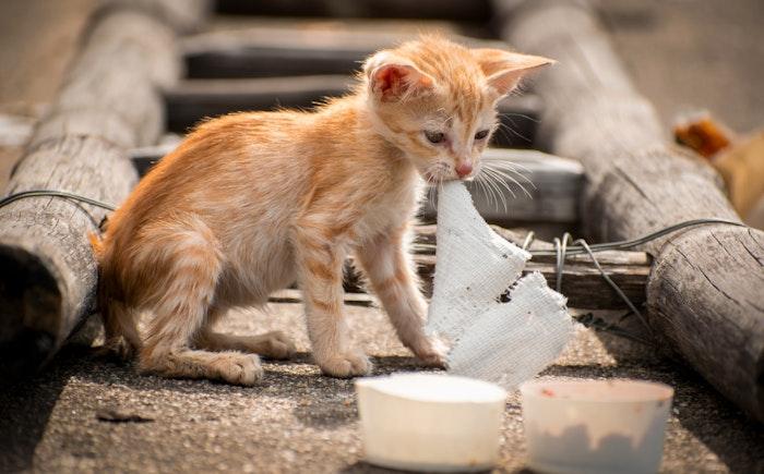 猫の避妊・去勢のメリットとデメリット