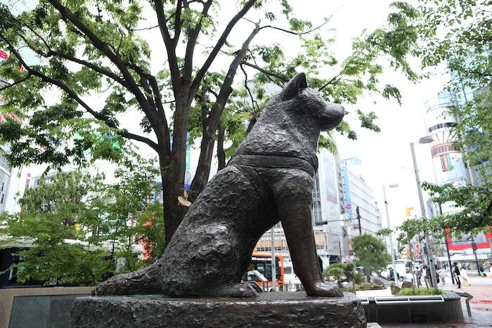 日本で最も有名な犬と言っても過言ではないのが秋田犬のハチ公