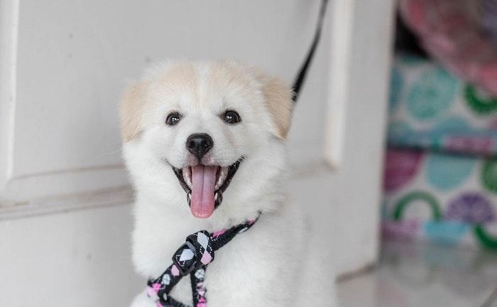 犬ジステンパーの治療および予後