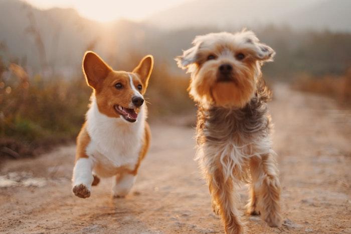 狂犬病の予防接種は法律で義務づけられている
