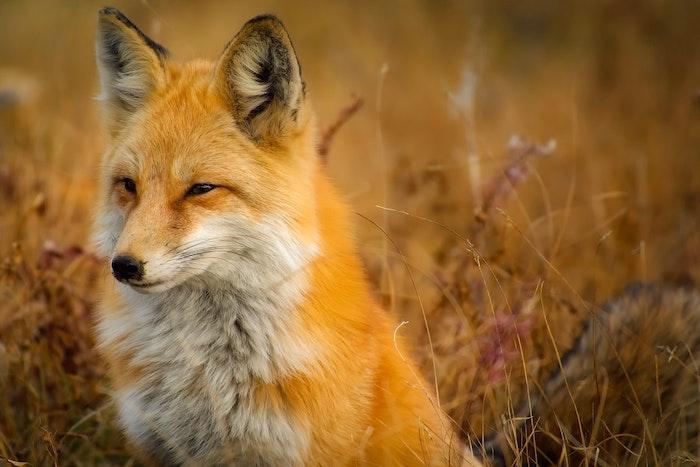 野生動物 保護 飼える 飼えない 狩猟