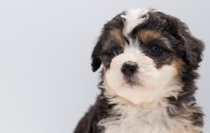 ケンネルコフ 犬 感染症
