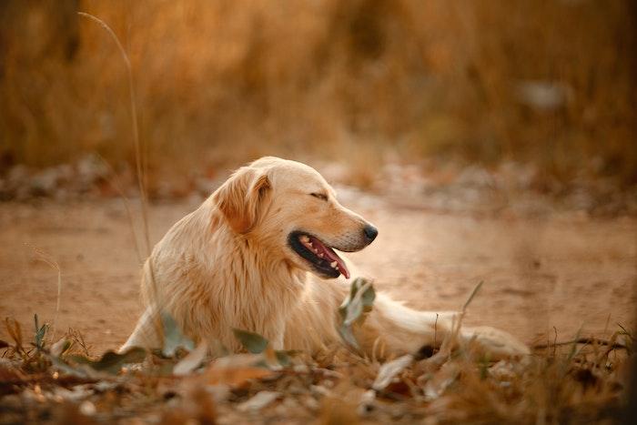 犬伝染性肝炎という感染症。ワクチン、打ちましたか?
