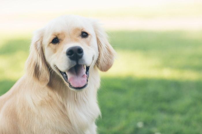 犬鉤虫 寄生虫 人獣共通感染症 予防