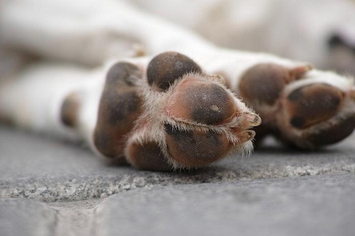 瓜実条虫 犬 ペット 予防 獣医 寄生虫 感染症