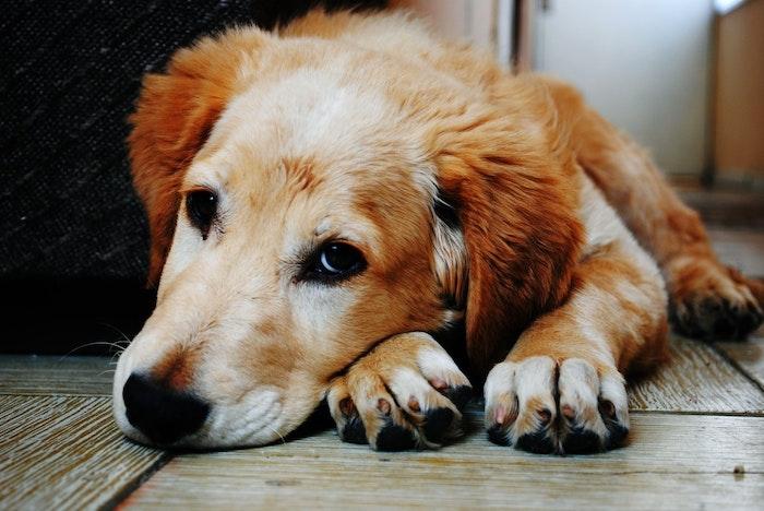 犬鞭虫 犬 ペット 予防 獣医 寄生虫 感染症