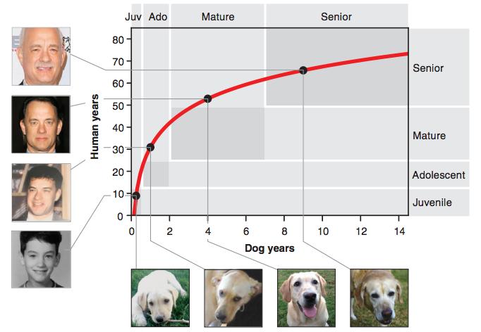犬 人間 年齢換算 論文