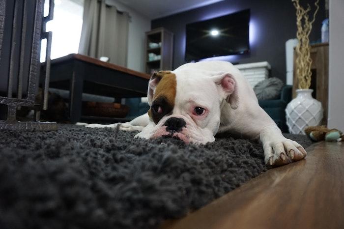 ノミ 犬 痒み 寄生虫 病気 予防