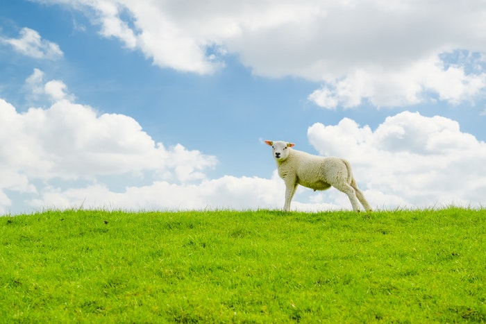 家畜 屠殺 動物福祉 食肉