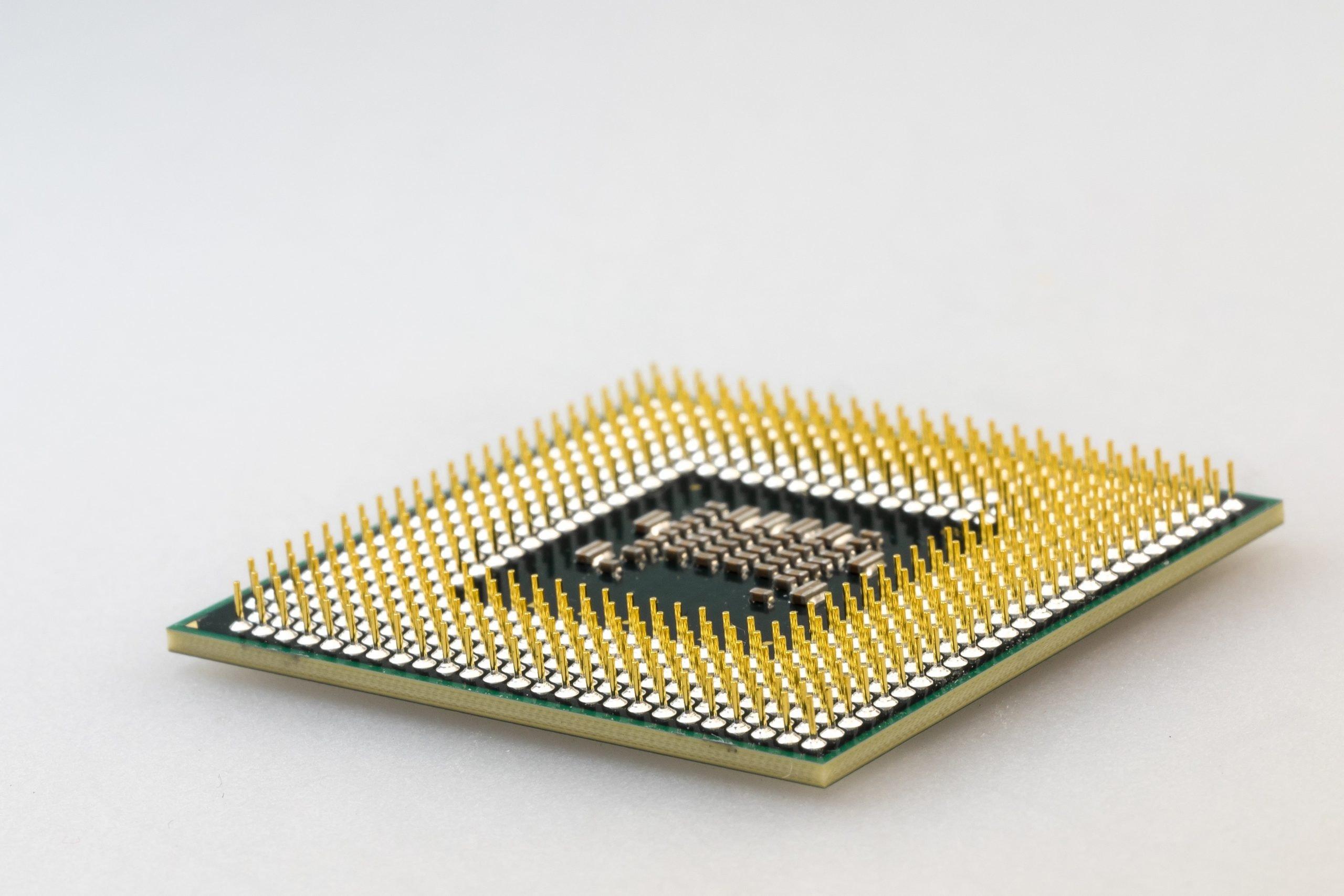 ペット産業のCSR事例、マイクロチップ無償装着活動