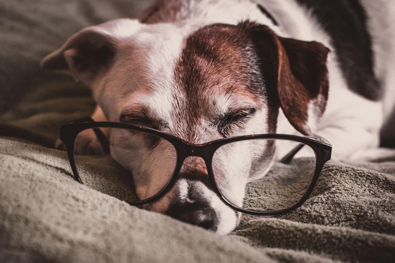 ペット産業のCSR事例、繁殖引退犬の譲渡を促進