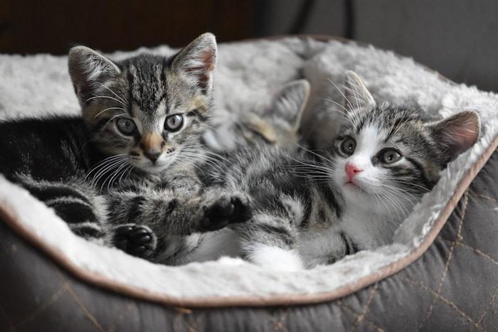 風邪 ウイルス性上部気道感染症 猫