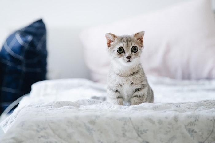 猫回虫症,猫,寄生虫,感染症