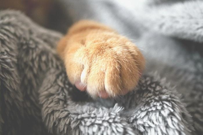 猫鉤虫,感染症,猫,寄生虫,ペット
