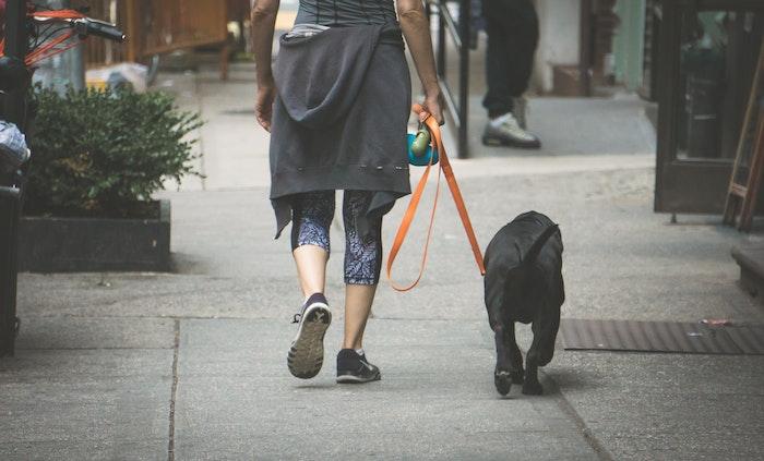 犬 連れ去り 盗難 対策