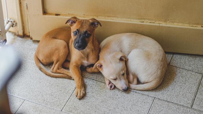 北朝鮮 犬 飼育 禁止 ペット