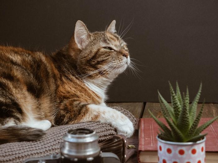 猫,ノミ,寄生虫,病気,予防,治療