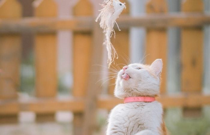 猫 絶滅危惧 鳥 侵略的外来種