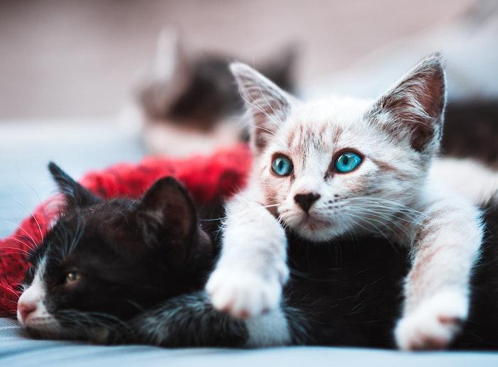 猫 マダニ 疾患 予防