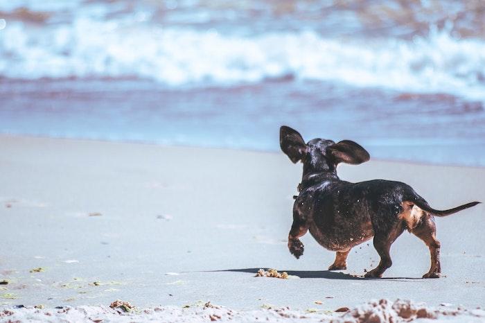 犬 犬かき 泳げる プール