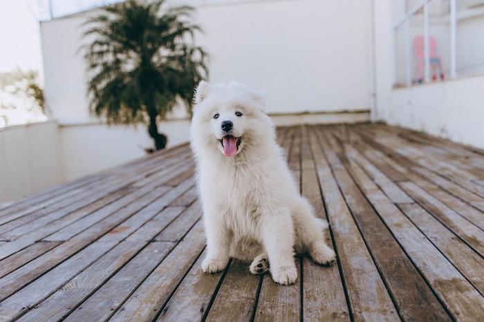 ノーズワークゲーム 犬 ストレス解消 脳トレ
