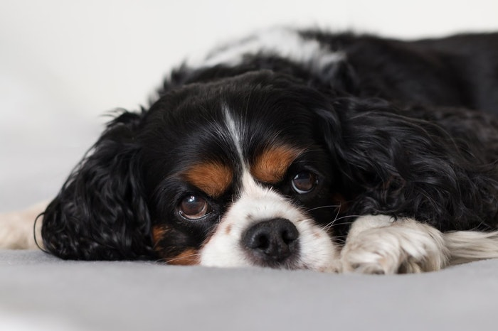 犬 嘔吐 病気 吐く 感染症