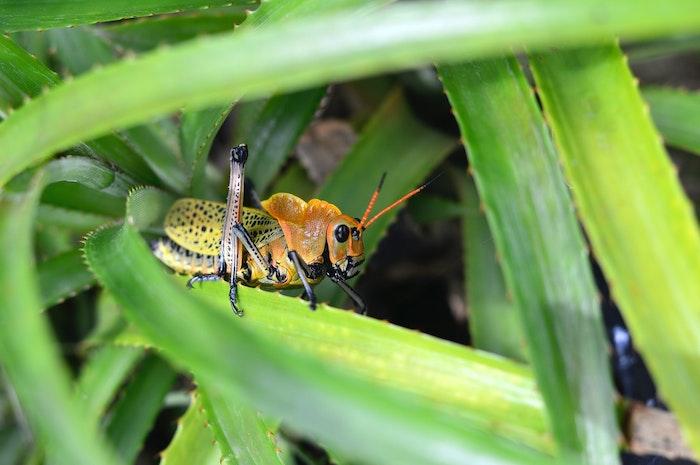 昆虫食,ペットフード,環境問題,食糧不足,ペット