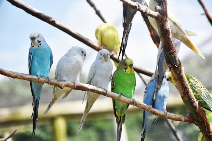 オウム病,鳥,インコ,ハト,集団感染,予防法