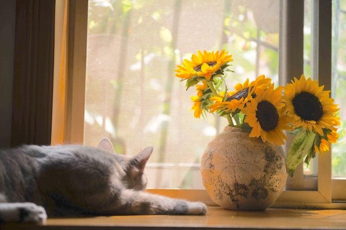 野良猫 成猫 保護 猫 大人 飼い方