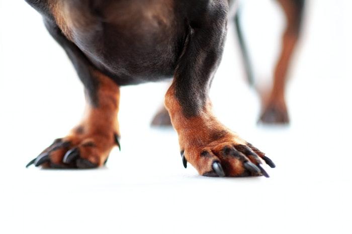 犬,歩様異常,疾患,病気