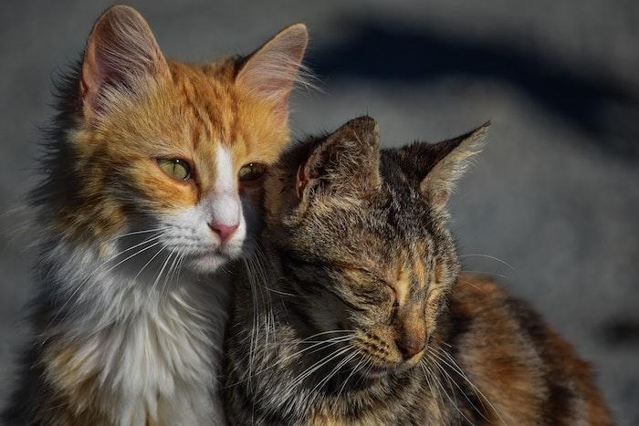 野良猫,動物病院,費用,医療費