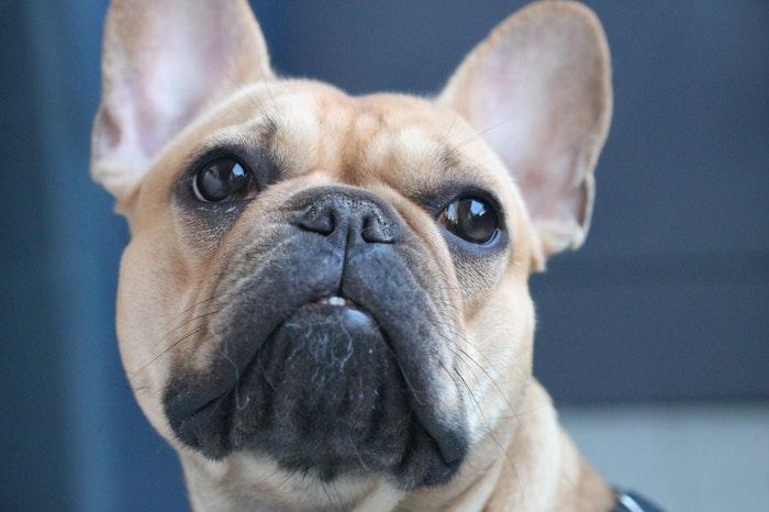 犬 咳 疾患 病気 原因 獣医師