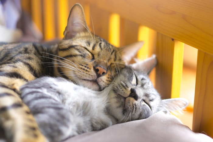 先住猫,新入り猫,対面,時期