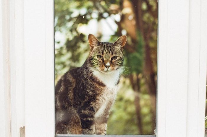 野良猫 捕獲 保護 捕獲器 餌 捕まえ方