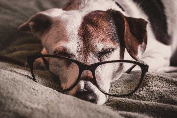 犬,眼,異常,症状,病気