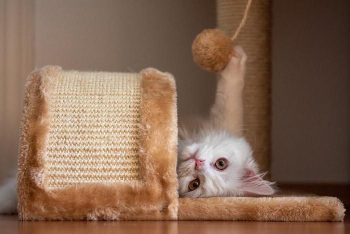 猫,保護猫,懐く,野良猫,飼い方