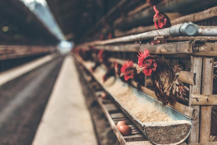 鳥インフルエンザ 感染 予防
