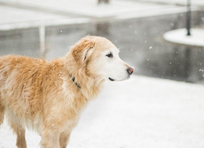 犬 震え 寒さ 原因 病気