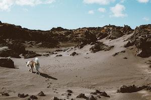 大昔から人間のそばに犬は寄り添っていた