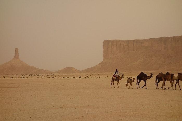犬,人間,サウジアラビア,古代,岩絵,壁画,遺産,狩り,世界最古