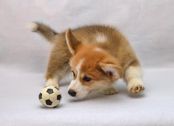 ペット,犬,猫,コロナ,分離不安,新型コロナ,コロナ後,コロナ禍,不安,ストレス,留守番