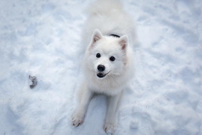 犬,雪,食べる,冬,凍傷,しもやけ