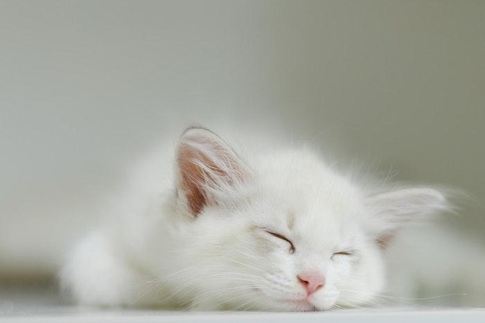 猫,飼い方,ストレス,社会化期,子猫
