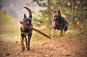 犬,硬いおやつ,鹿の角,健康,歯,誤飲