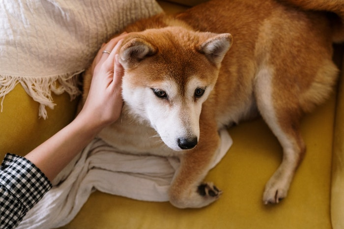 犬,くるくる回る,回る,理由,しっぽ,ストレス,病気