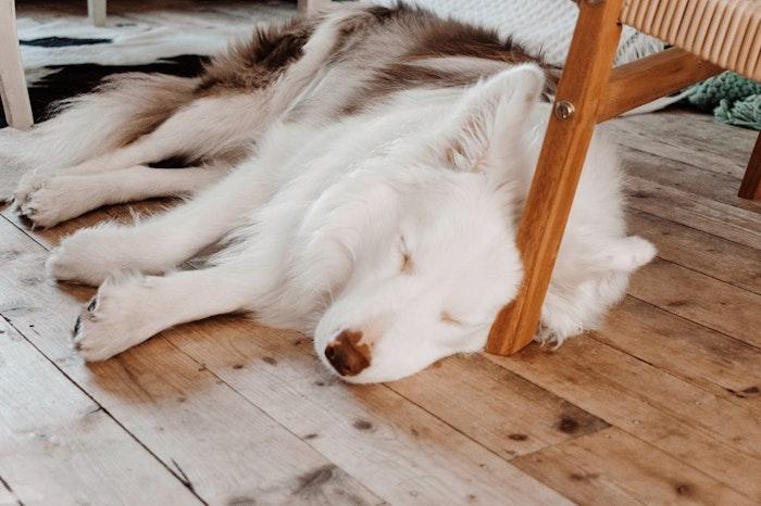 犬,いびき,病気,呼吸,鼻,喉